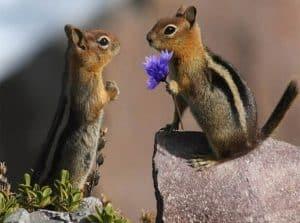 skiouro_flower_marriageforweb